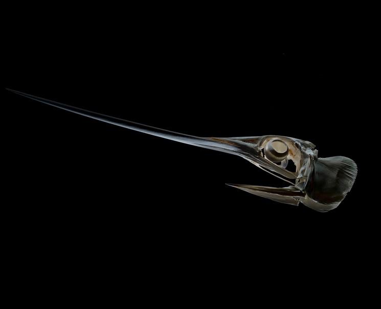 Swordfish - PHOTO COURTESY OF ZACH SCHWARTZ